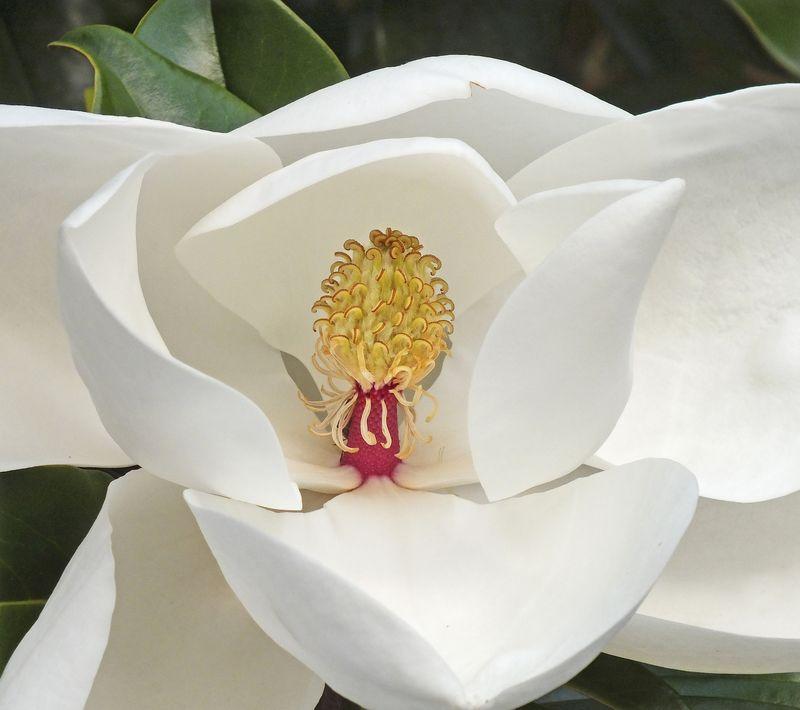 MagnoliaEM3MayFuji_1762
