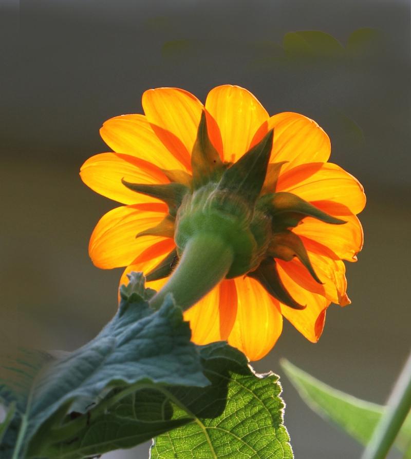 FlowerEM4BackView_7176