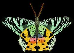 Butterfly-1203923__180