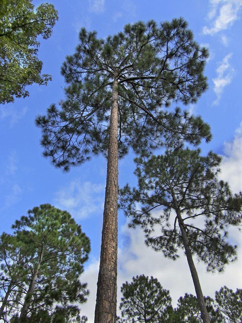 TreeEM2Dump_1512