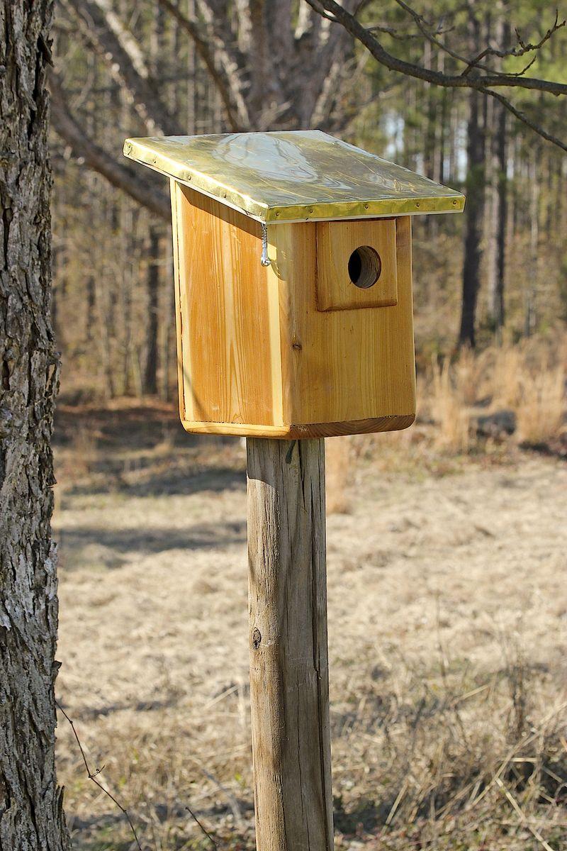 BirdEM2HouseFeb_0358 copy