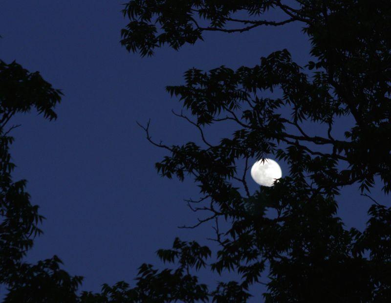 Moon2TreeApril30_9671
