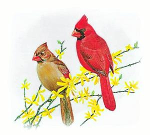 Cardinal_5