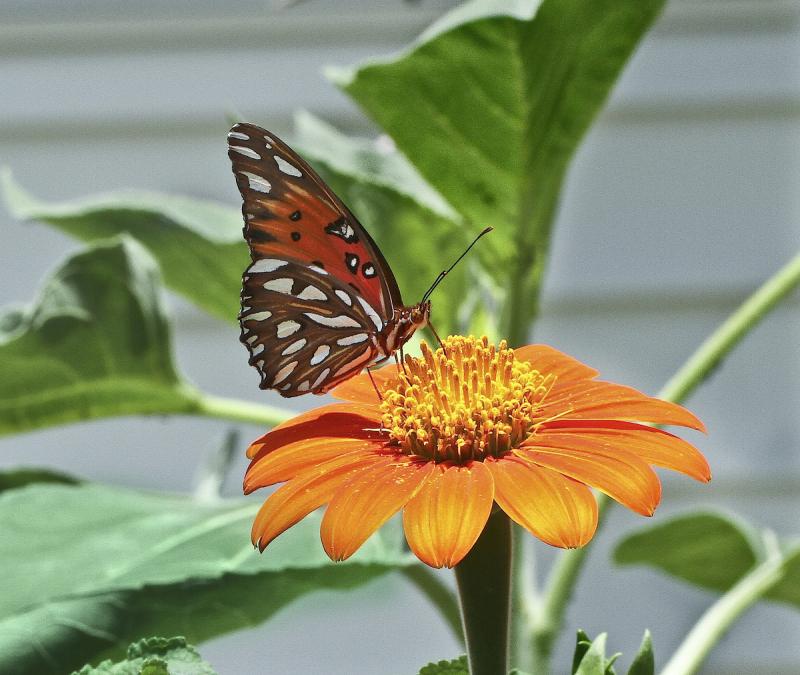 ButterflyEM4_6788-2