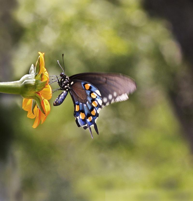 ButterflyEM3Black_4874