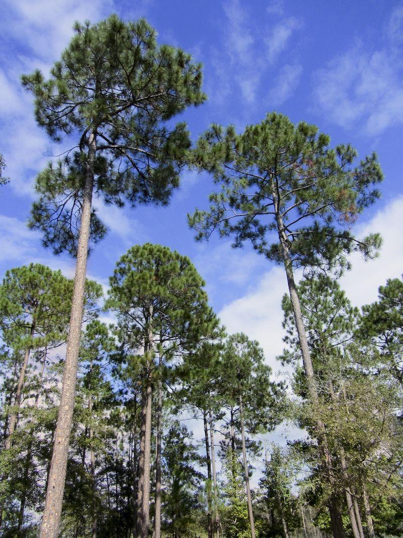 TreesEM2Dump_1517