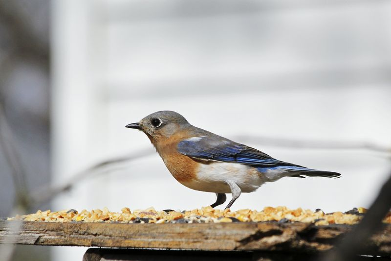 BlueEM2birdFeb_0225