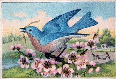 Bluebirdcherrygfairy003