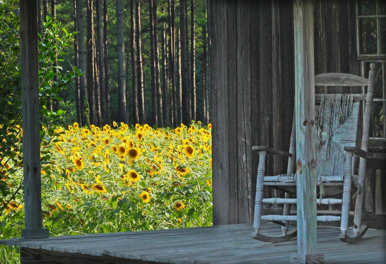 Poem Sunflowerske A Ray Of Sunshine Lightkeepers Journal