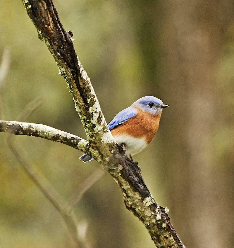 Bluebird2EM_0447