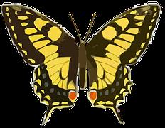 Butterfly-1204621__180