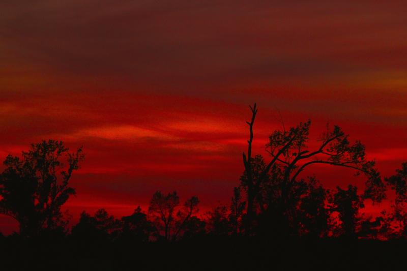 SunsetRedEMTreeBear_6052